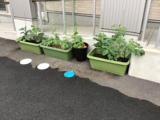 🍀プランター菜園🍀
