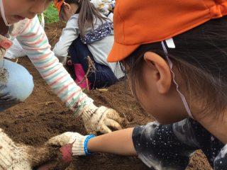 収穫の秋!!!お芋掘りに行ってきました。