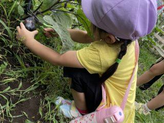 野菜を収穫しました‼️